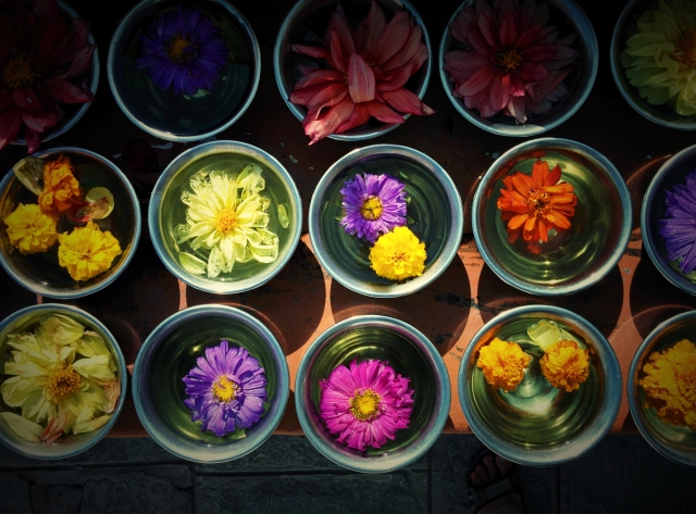 dreamstime_m_49559983-flowers in bowls